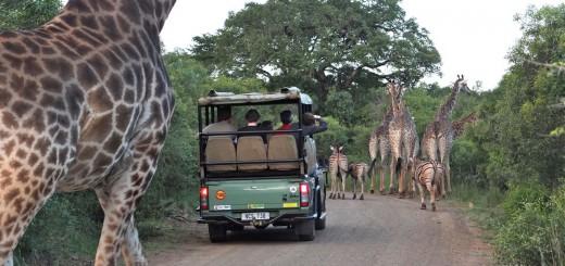 safariaor
